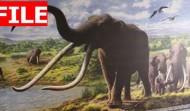 PREHISTORIC CEMETERY OF ELEPHANTS IN ROME